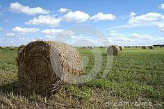 A beautiful classic image of a large flat field of straw freshly cut and rolled into round bales and spread throughout the field fading into the far horizon.