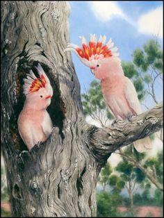 Major Mitchell's Cockatoo by Gordon Hanley