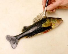 FREE FISH ART LESSON - GYOTAKU Fish Rubbings - Art by Barry Singer