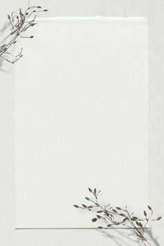Dry branch psd off white background text space | free image by rawpixel.com / nunny Flower Background Images, Paper Background Design, Powerpoint Background Design, Flower Backgrounds, Blog Backgrounds, Floral Wallpaper Phone, Gold Wallpaper Background, Pastel Background, Aesthetic Iphone Wallpaper