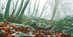 Herbstimpressionen: Wenn du leidest, ist es wegen dir. Wenn du fröhlich bist, ist es wegen dir. Wenn du dich glücklich fühlst, ist es wegen dir. Niemand ist verantwortlich, wie du dich fühlst,nur du alleine. Du bist die Hölle und zugleich der Himmel. (Bild: Till-Eulenspiegel)