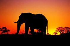 Kenya, Africa: http://www.flightcentre.ca/blog/tours/a-trip-of-a-lifetime-in-kenya/9881#