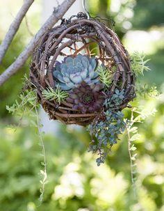 Arranjo natural para suculentas feito com galhos de videira. #succulent #grapevineballbasket