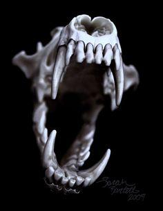 Skull Photography by Sarah Bartell http://skullappreciationsociety.com/photography-sarah-bartell-aka-little-lioness/ via @Skull_Society