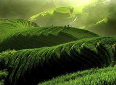 In beeld: de mooiste groene bestemmingen