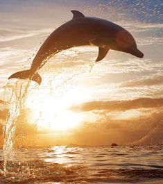 51 Interesting Dolphin Facts And Information For Kids