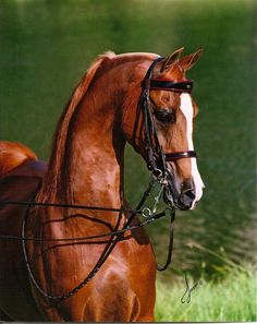 Hucklebey Berry+/  ♥  1984-2011 a great sire.  Huckleberry Bey x Miz Bask by Bask