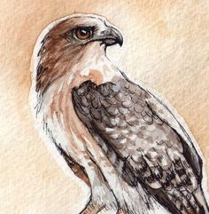 RedTailed Hawk  Print of Original Watercolor by OnlyPrettyThings, $10.00