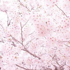 【nasakura.japan】さんのInstagramをピンしています。 《【大和言葉:こよなく】 「懐かしむ」とか「愛する」を強調するとき、 「大変」や「とても」、「すごく」や若者言葉の「チョー」、 また「このうえなく」ではなく、 「こよなく」をつけると心の底から、、、 という気持ちが伝わってきますね。 「こよなく愛しています」 深みがある言葉ですね♡ 🌸  Japanese Beauty in Daily Life ♡日本の日常の美を伝える #580  奈奈より♡ Photo by Photo-AC ☆.。.:*・°☆.。.:*・°☆.。.:*・°☆.。.:*・°☆ 本日、美可ちゃんのライブ! 応援してね。 9月29日(木)19:00~渋谷伝承ホール ⇒ https://www.facebook.com/events/155853118154071/  奈桜 NasakuraのFacebookページです。 「いいね」いただけましたら嬉しいです。 ⇒ https://www.facebook.com/nasakura39…