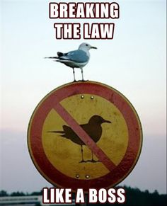 The bird is so perfectly perched and looks totally like the sign! Ha!