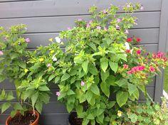 17-08-2015 Zwei interessante Beobachtungen: bitte im Kommentarfeld lesen ;-) Felder, Plants, You're Welcome, Reading, Plant, Planets