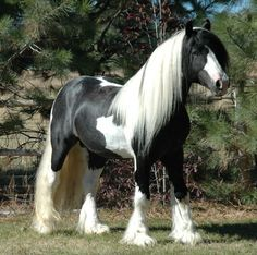 Horses are the only species capable of combining jet black and platinum blonde that in no way looks trashy. | 20 Horses With Better Hair Than You