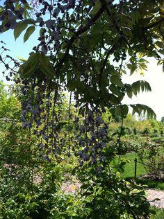 #Brooklyn Botanical #Garden.