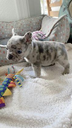 Super Cute Puppies, Baby Animals Super Cute, Cute Baby Dogs, Pretty Animals, Cute Dogs And Puppies, Cute Little Animals, Bulldog Puppies, Cute Funny Animals, Animals Beautiful