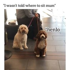 We are giving away the first 50 car seat leash to spread the movement! Cute Puppy Videos, Funny Animal Memes, Funny Animal Videos, Funny Animal Pictures, Cute Funny Animals, Cute Baby Animals, Funny Cute, Funny Dogs, Animals And Pets