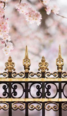 Paris in Pink Black Gold