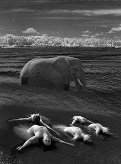 Claire Claire, Photographs, Elephant, Animals, Animales, Animaux, Photos, Elephants, Animal