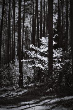 bwstock.photography  //  #forest Black White Photos, Black And White, Free Black, Nature, Photography, Black White, Fotografia, Blanco Y Negro, Naturaleza