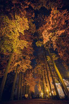 Gorgeous Autumn night, Netherlands by Chris Zielecki 11/21/13.  Love the trees up lighted! <pin by Jessi Shuman on Favorite Places & Spaces>