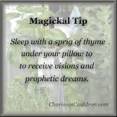 Sprig of Thyme (Magickal Tips & Hints) – Witches Of The Craft®