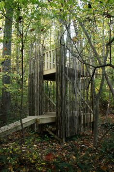 A kid's playhouse (tree house) that blends in with the woods by surrounding it in bamboo.  (in Baltimore MD)