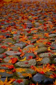 autumn, leaves, and fall image Autumn Rain, Autumn Trees, Autumn Leaves, Fallen Leaves, Aldo Conti, Fall Pictures, Fall Pics, Fall Photos, Fall Harvest