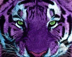 Google Image Result for http://www.deviantart.com/download/191791406/purple_tiger_by_schizophrenicracoon-d366r72.jpg