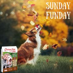 Nothing better than a Sunday full of FUN.