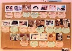 Image result for cat cafe rules