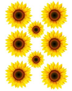 Full Sheet Waterslide Images Sunflowers All Kinds & Sizes / sunflowers laser printed / laser decals / tumbler supplies yeti decal How To Make Sunflower, Sunflower Art, Sunflower Clipart, Sunflower Images, Diy Tumblers, Custom Tumblers, Tumbler Stickers, Yeti Decals, Cricut Creations