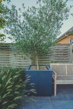 Olijfboom in plantenbak op een zonnig terras in een stadstuintje. Realisatie Tuinarchitect De Roose