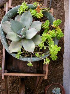 Random thought in random world: Home edition: Outside garden