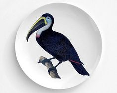 Blue Toucan Bird Melamine Plate  Toucan Plate  by TheRekindledPage