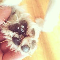 did you ever take a closer look at your dogs feet?
