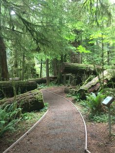 Cathedral Grove. Vancouver Island, British Columbia.