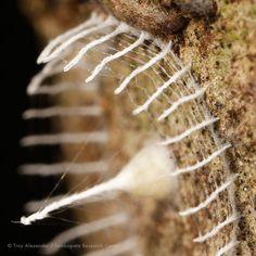 Descubren en Perú misteriosas cercas construidas por un insecto desconocido (FOTOS)