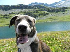 La foto stupenda di @chiara__photo che ritrae Brie in tutto il suo splendore con un panorama fantastico a far da cornice   To be featured: #BauSocial  Follow   Follow our pawtner: @miaosocial    . #dog #dogs #family #fun #puppy # #nature #love #friend #animals #landscape_lovers #cane #mountains #monamour #france #pet #petstagram #amour #funny #cute #play #thuglife #animallovers #mylove #nature #picoftheday # @bausocial.it #italia