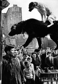 paris, 1953 [original] © marc riboud, from paris magnum (english version) » view similar photos | more from this photographer