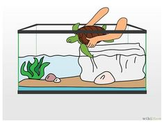 How to Clean a Turtle Tank: 14 Steps (with Pictures) - wikiHow