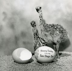Happy Easter (photo from 1967)