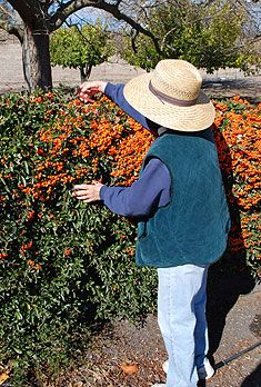 When To Prune Shrubs | Evergreen or Deciduous