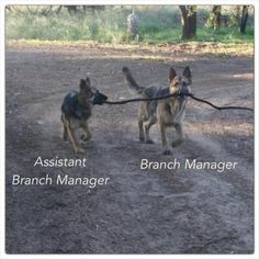 The branch masters