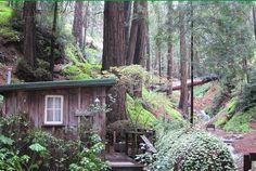 Cottage idea for creekside
