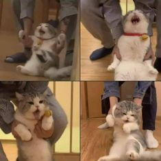 Cute Baby Cats, Cute Little Animals, Cute Funny Animals, Kittens Cutest, Cats And Kittens, Funny Cats, Meme Chat, Photo Chat, Cat Aesthetic