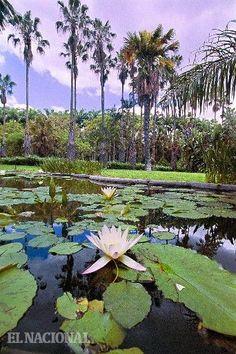 Jardin Botánico de la Universidad Central de Venezuela (UCV). Foto: Yanny Montilla / El Nacional / 07-05-2004