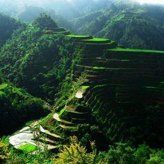 Rijstvelden Philipijnen