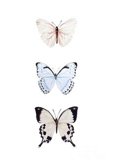Three butterflies painting by Marie Burke Background Three butterflies painting by Marie Burke Background Lucy Wand Three butterflies painting by Marie Burke background backgrounds Burke nbsp hellip Painting aesthetic Iphone Background Wallpaper, Aesthetic Iphone Wallpaper, Aesthetic Wallpapers, Butterfly Wallpaper Iphone, Art Inspo, Inspiration Art, Cute Wallpaper Backgrounds, Cute Wallpapers, Interesting Wallpapers