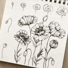 Poppy Drawing, Floral Drawing, Flower Drawing Tutorials, Flower Drawings, Ink Drawings, Hand Drawn Flowers, Draw Flowers, Art Journal Inspiration, Journal Ideas