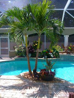 Tropical Poolside landscape plantings