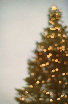 christmas tree all-a-glow | photo by tina crespo